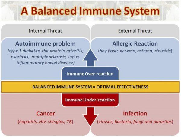 Balanced Immune System