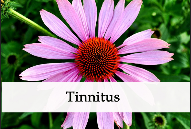 herbs for tinnitus