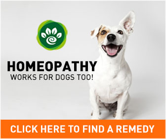 homeopathic remedies for dogs